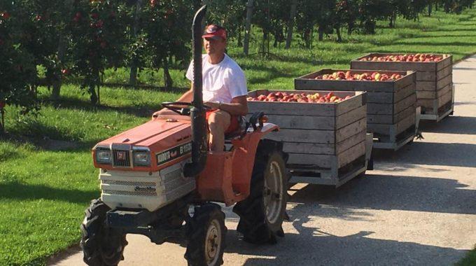 Heerlijke Appels Uit Eigen Boomgaard